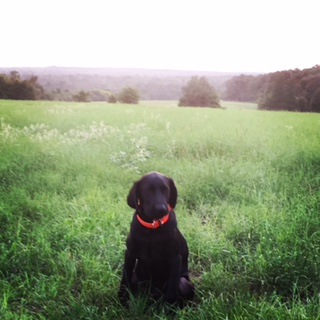 gus-at-top-of-pasture