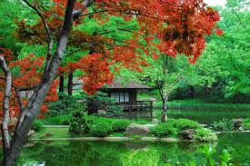 japanese-gardens-pond-and-tree