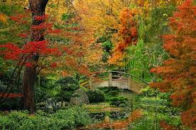 japanese-gardens-tree-bridge