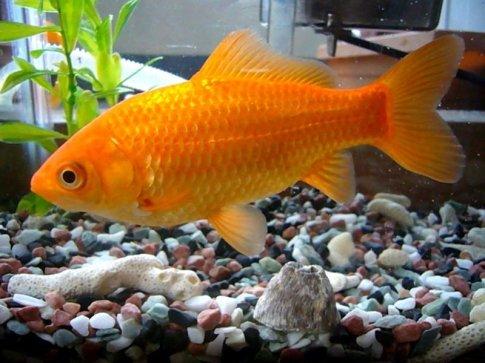 fish tank one