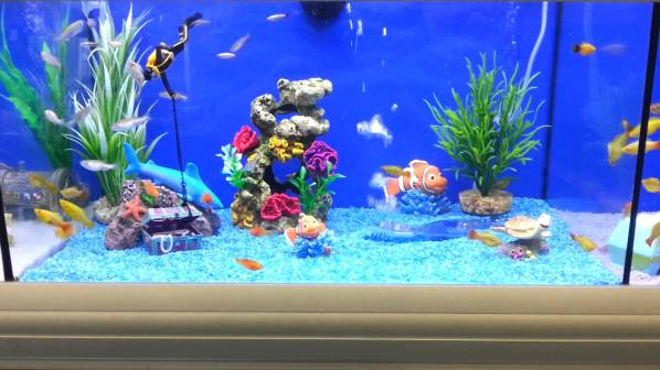 fish tank two