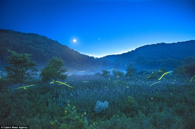 Fireflies near mountains