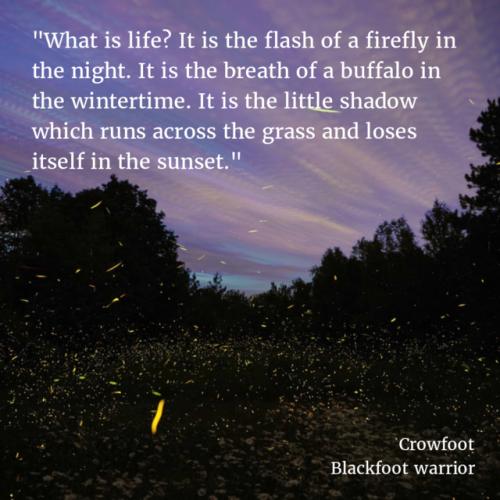 Firefly verse